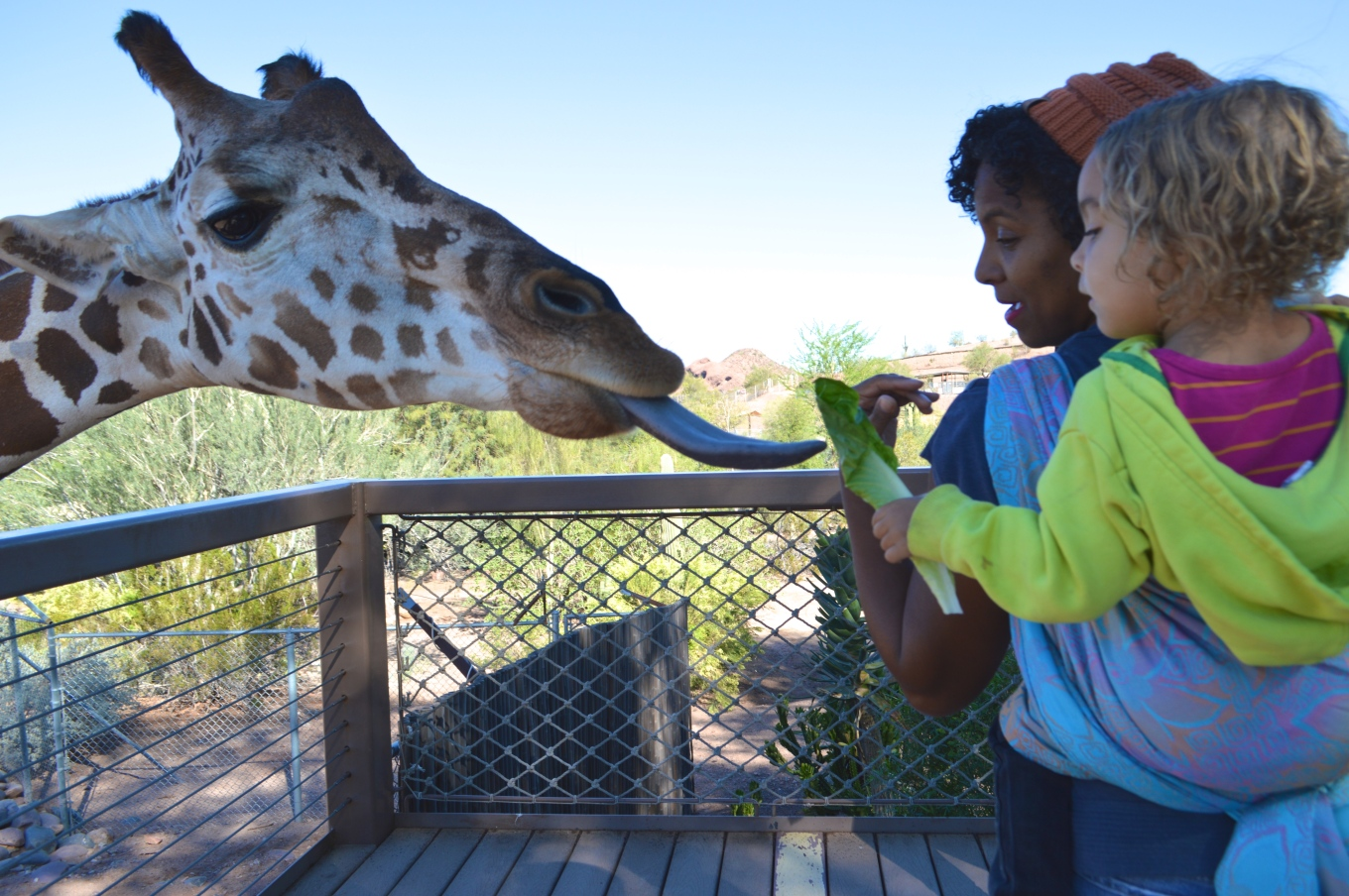 Baby holds a piece of Romaine Lettuce in hand outstretched toward a giraffe. The brown and white spotted head of the giraffe is seen with blue tongue extended reaching for the lettuce. Medium brown Momma with natural curly hair wears orange-brown knit cap and red lipstick. Her light brown, curly blond haired toddler wears a neon yellow hoodie. Baby is on Momma's back in a Double Hammock carry in a gradient orange to pink on pale blue background woven wrap with embossed jonquil flowers.